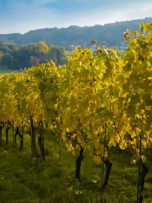 Vinho Verde region